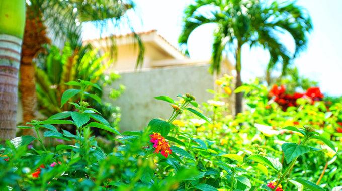 まるでふたりを祝福してくれているかのように、いたるとろこに色鮮やかな南国の花々が咲く