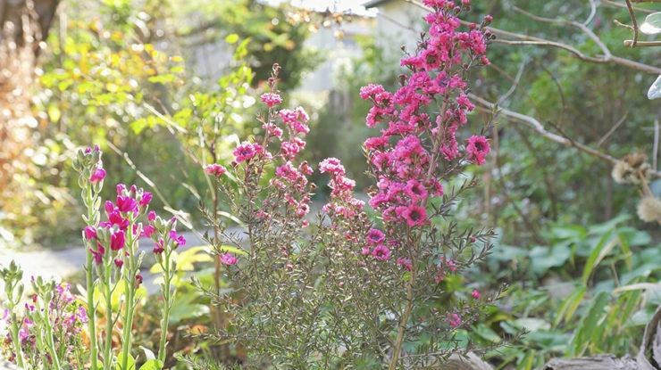 ガーデンには季節ごとに咲く花々。オーナーが何年もの時間をかけて作り上げた隠れ家的なロケーション