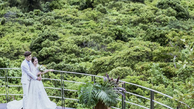 目の前に広がるやんばるの森の深い緑。青い空とのコントラストは一生の思い出になるはずです